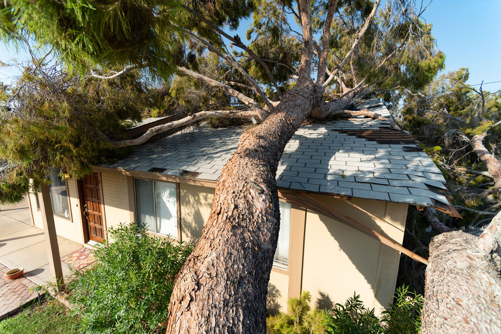 Large tree fallen on roof of house